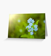 Unique blue forget-me-not flowers close up Greeting Card