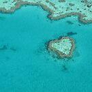 Heart Coral Reef by Kasia  Kotlarska