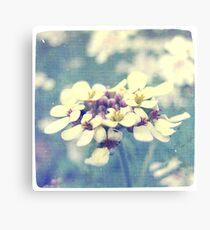 Fleurs Blanches et Violettes Canvas Print
