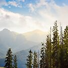 High Tarta mountains behind the trees by mike-pellinni