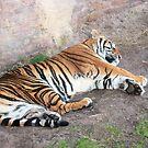Sleeping Tiger by Dan Shiels