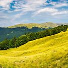 panorama with trees on the grassy hillside by mike-pellinni
