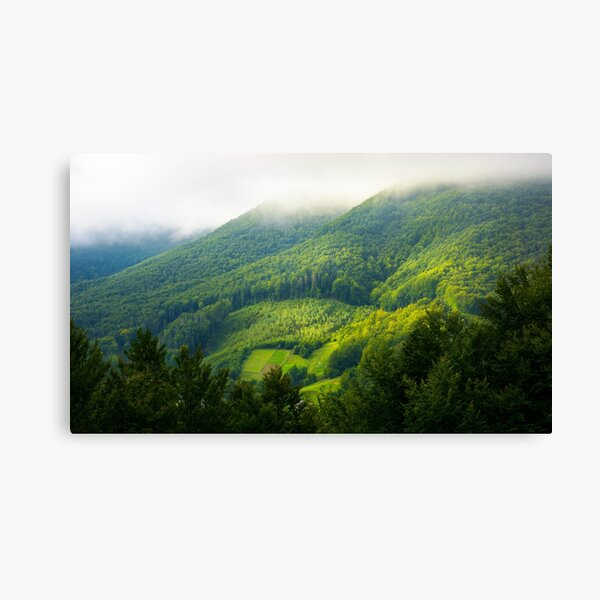 mountain forest in morning fog Canvas Print