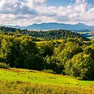 forest on a grassy hill in afternoon by mike-pellinni