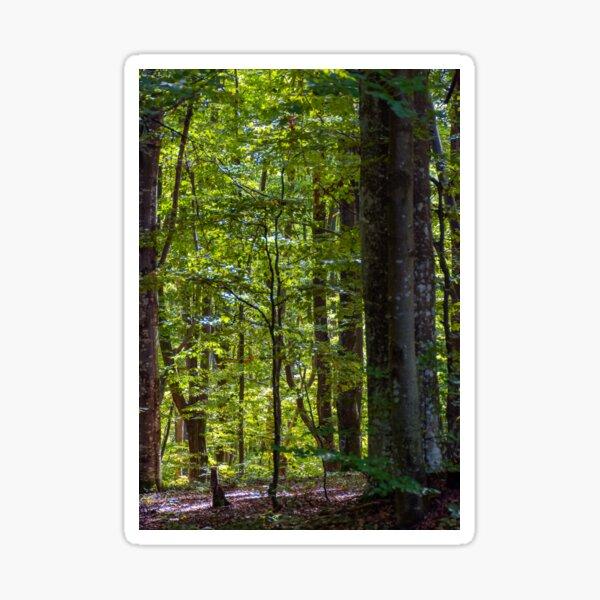 look in to the deep dark beech forest in summer Sticker