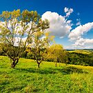 row trees a hillside in autumn by mike-pellinni