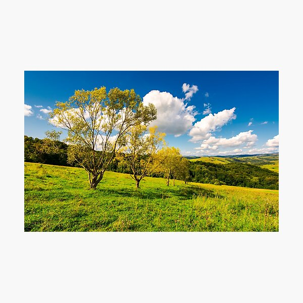 row trees a hillside in autumn Photographic Print