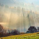 row of trees on the meadow in morning fog by mike-pellinni
