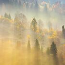 fog over the forest in morning light  by mike-pellinni