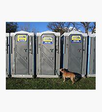 Porta Dog Photographic Print