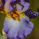 Iris with wasp in macro by Bryan D. Spellman
