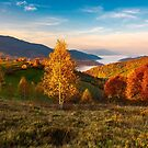 yellow trees on the edge of a hill in autumn by mike-pellinni