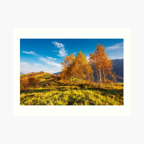 yellow birch trees in mountains at sunrise Art Print