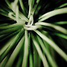 Natures Knots by Mark van den Hoek