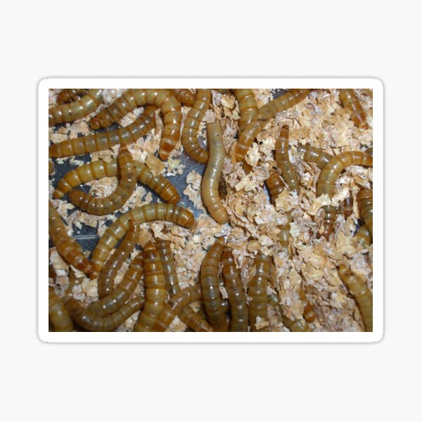 Mealworms Sticker