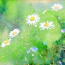 Daisies and Forget Me Not Flowers by Lynn Bolt