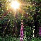 FOXGLOVE SUNSET by Elaine Bawden
