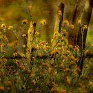 Fence Long Ago by Anne  McGinn