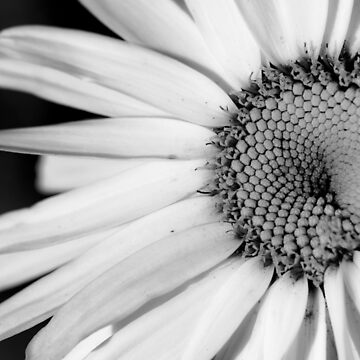 Black and White Flower by Dai-Boo