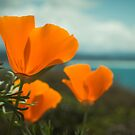 Poppies with Ocean by williamsrdan