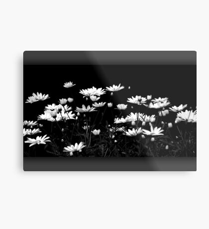 Daisy time Metal Print