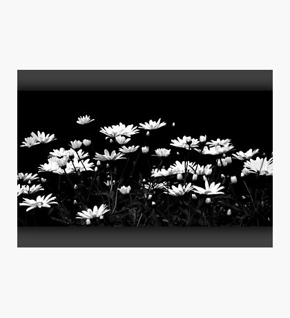 Daisy time Photographic Print