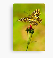 Buds and Butterfly Canvas Print