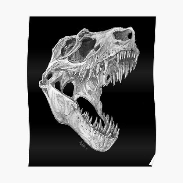 T-rex skull Poster