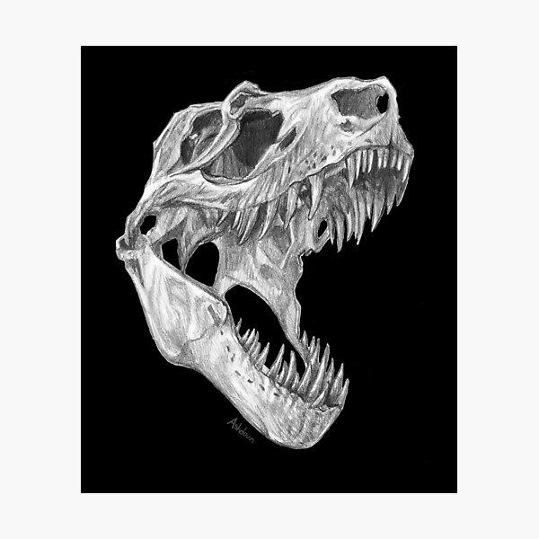 T-rex skull Photographic Print