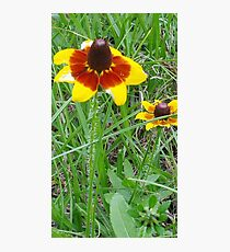 bold yellow flower Photographic Print