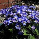 Blue and White Senetti Planter by EasterDaffodil