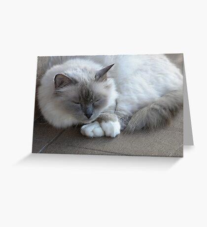 Zsa Zsa  Greeting Card
