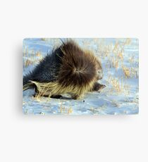 Porcupine in Ground Blizzard Metal Print