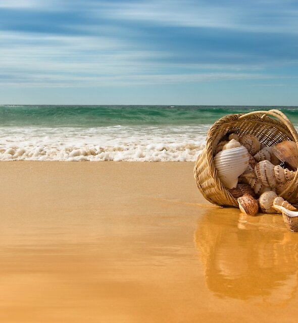 Seashells Forster 061 by kevin Chippindall