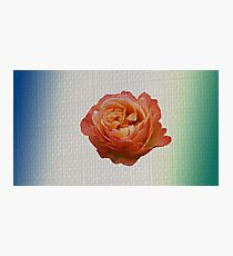 Single rose with textured layer applied Photographic Print