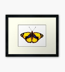 Photo close up butterfly Framed Print