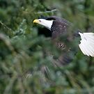 Eagle Through the Trees by David Friederich