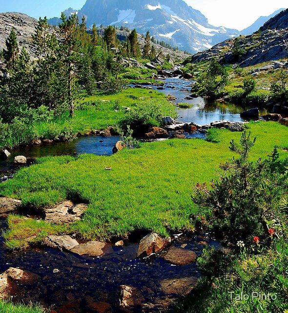 Alpine Meadow Stream by Talo Pinto