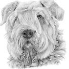 Bouvier des Flandres by doggyshop