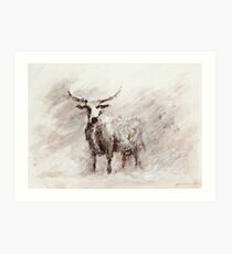 Exmoor Cow in Blizzard Art Print