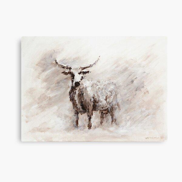 Exmoor Cow in Blizzard Metal Print
