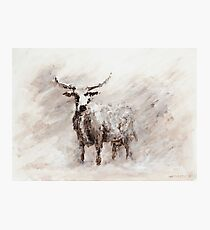 Exmoor Cow in Blizzard Photographic Print