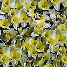 Narcissus by Woodie