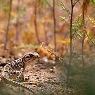 Leopard Lizard Lurking by SB  Sullivan