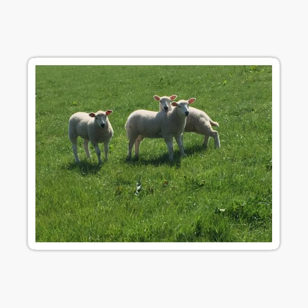 Three Lambs Sticker