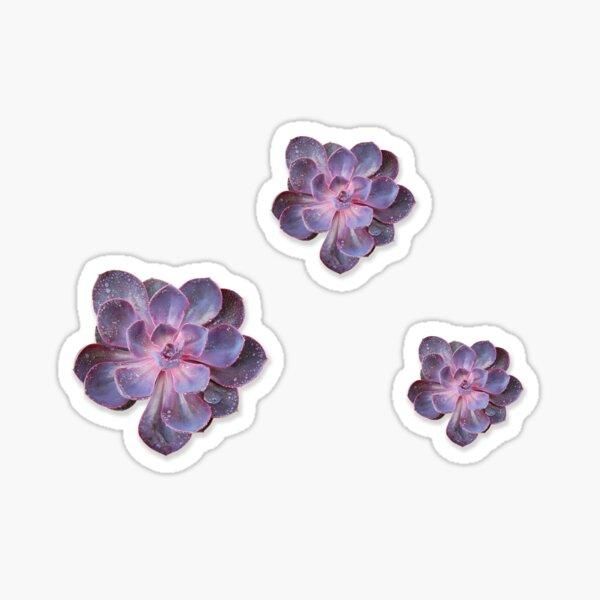 Triple Purple Echeveria Sticker