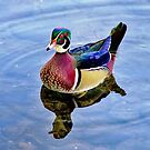 The Amazing Mister Wood Duck  by Lanis Rossi
