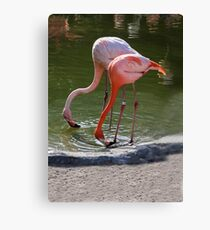 #23 and Friend Canvas Print