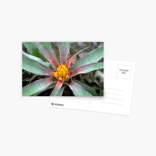Tropical Bromeliad in Guyana Postcard