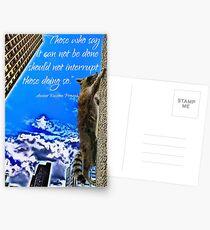 Ancient Raccoon Proverb Postcards